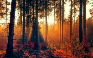 Сочинение на тему Лес осенью (Осенний лес)