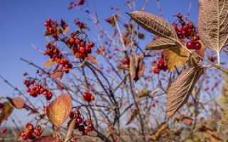 Анализ стихотворения Осень Майкова 7 класс