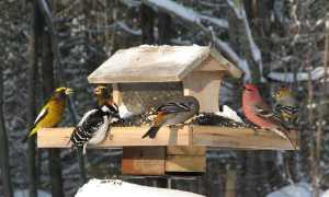 Доклад Как помочь животным в зимнее время? для стенгазеты