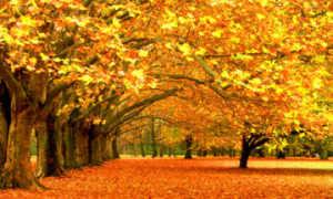 Сочинение на тему Осенний листопад