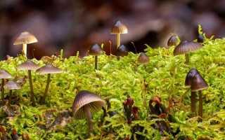 Несъедобные грибы – сообщение доклад