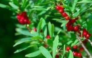 Доклад на тему Ядовитые растения сообщение 2 класс, 3 класс