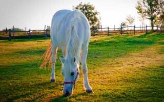 Анализ рассказа Абрамова О чем плачут лошади