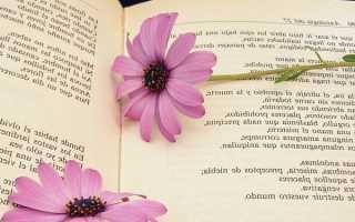 Анализ стихотворения Слово Гумилева