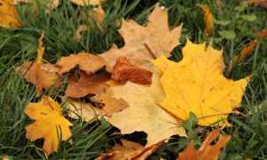 Сочинение на тему Осень в парке 3 класс