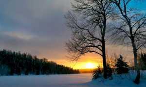 Сочинение на тему Зимняя сказка (3, 4, 5, 6 класс)