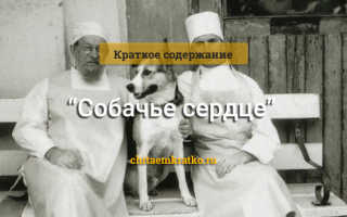 Краткое содержание Собачье сердце Булгакова