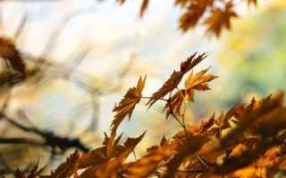 Сочинение про Золотую осень