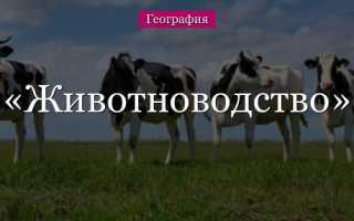 Животноводство – доклад сообщение (3, 4, 9 класс окружающий мир)