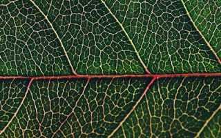 Фотосинтез – доклад сообщение