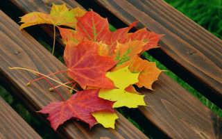 Сочинение на тему Вид из окна осенью