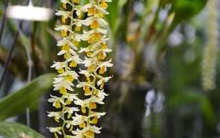Тропические растения – сообщение доклад