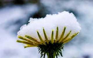 Снегурочка – краткое содержание сказки Гримм