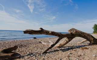 Остров Врангеля – доклад сообщение