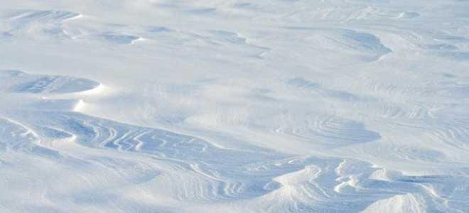 Белая цапля – краткое содержание сказки Телешова