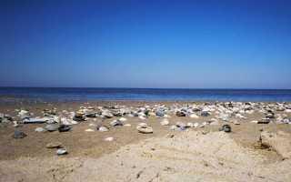 Моллюски – сообщение доклад (2, 3, 7 класс. Биология)