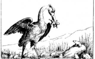 Басня Эзопа Лягушки, просящие царя
