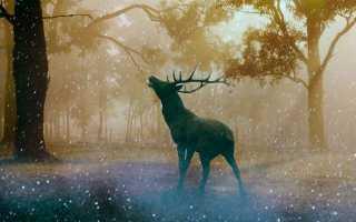 Записки охотника – краткое содержание повестей Тургенева