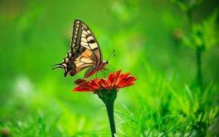 Бабочки – сообщение доклад (2, 7 класс. Биология. Окружающий мир)