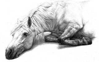 Хорошее отношение к лошадям – краткое содержание стиха Маяковского