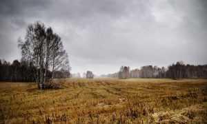 Анализ стихотворение Есенина Нивы сжаты