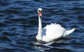 Краткое содержание Не стреляйте в белых лебедей