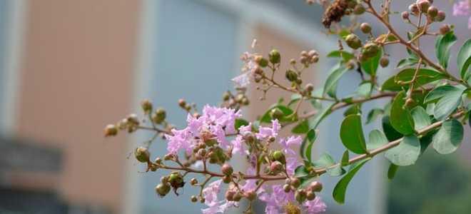 В поисках радости – краткое содержание рассказа Розова