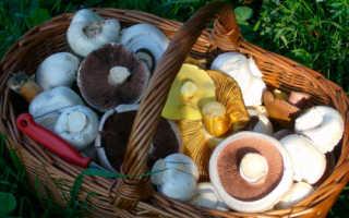 Доклад на тему Ядовитые грибы сообщение 4, 5, 3 класс