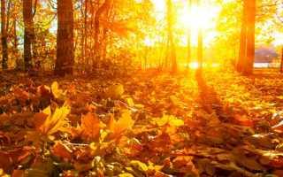 Анализ стихотворения Осень Карамзина 9 класс