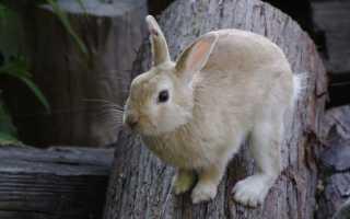 Кролики – сообщение доклад