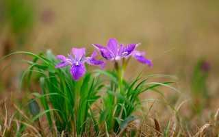 Сочинение на тему Приход весны