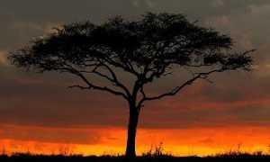 Доклад на тему Заповедники Африки (7 класс география) – сообщение