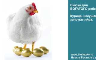 Басня Толстого Курица и золотые яйца