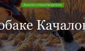 Анализ стихотворения Собаке Качалова Есенин