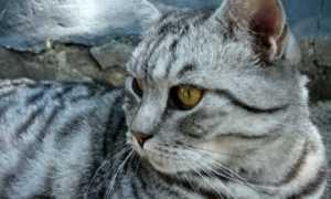 Сочинение про котенка