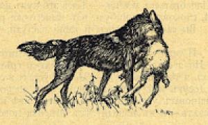 Басня Толстого Волк и Ягненок