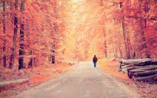 Сочинение Осенние каникулы и как я их провожу 2, 3, 4, 5, 6 класс