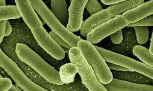 Бактерии – сообщение доклад (3, 5, 7 класс. Окружающий мир. Биология)