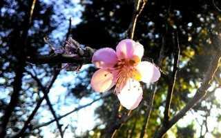 Анализ стихотворения Ахматовой Летний сад