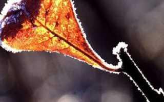 Анализ стихотворения Осень Бальмонта