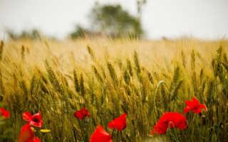 Анализ стихотворения И цветы, и шмели Бунина