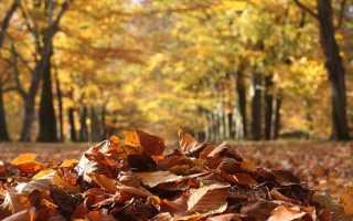Анализ стихотворения Осень Лермонтова 8 класс