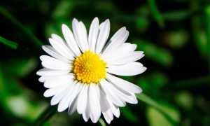 Цветик-семицветик – краткое содержание сказки Катаева