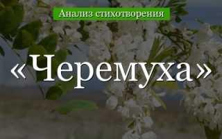 Анализ стихотворения Есенина Черемуха 5 класс