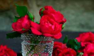 Роза мира – краткое содержание рассказа Андреева