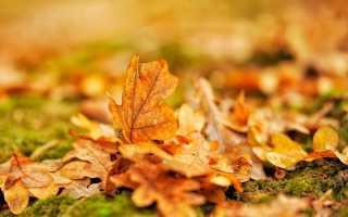 Сочинение на тему За что я люблю осень