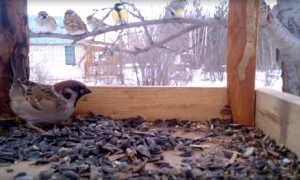 Сочинение на тему Птицы зимой, чем помочь