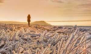 Гадкие лебеди – краткое содержание повести Стругацких