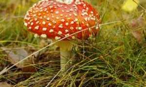 Анализ стихотворения Упоенье – яд отравы Есенина