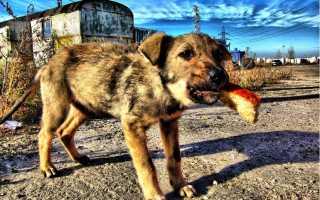 Хлеб для собаки – краткое содержание рассказа Тендрякова